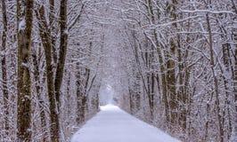 Zimy kraina cudów w Iowa Obrazy Royalty Free