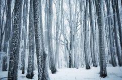 Zimy kraina cudów w lesie z mrozem na drzewach Fotografia Stock