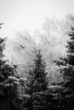 Zimy kraina cudów - zima las Zdjęcie Stock