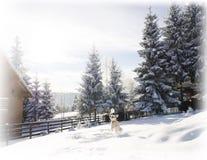 Zimy krainy cudów śnieg psi bawić się śnieg Fotografia Royalty Free
