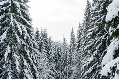 Zimy krainy cudów krajobraz z śnieżnymi jedlinowego drzewa wierzchołkami Zdjęcia Royalty Free