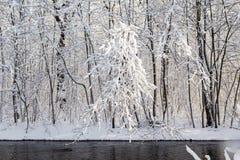 Zimy krajobrazowa lasowa śnieżna woda rzeczna Zdjęcia Royalty Free