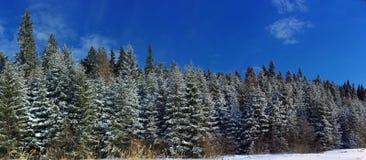 Zimy krajobrazowa panorama z sosnami Obrazy Royalty Free