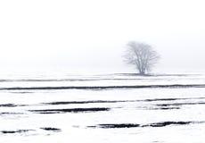 Zimy krajobrazowy drzewo Obrazy Royalty Free