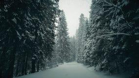 Zimy lasowa droga w spada śniegu Zdjęcie Stock