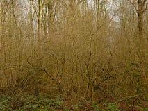 Zimy lasowy pustkowie w Flamandzkiej wsi zdjęcie royalty free