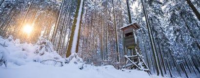 Zimy lasowy słońce z wysokim siedzeniem Fotografia Stock