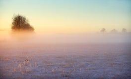 Zimy mgła fotografia royalty free