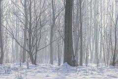 Zimy mgłowa lasowa scena, Zimny mgłowy las z śniegiem zdjęcie stock