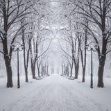 Zimy miasta park Zdjęcia Royalty Free