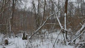 Zimy natury dziki las w śnieżnych suchych drzewach, krajobrazowa zima Obrazy Royalty Free