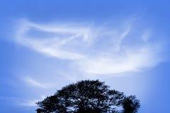 Zimy nieba wietrzny tło z bielem chmurnieje czarną drzewną sylwetkę Zdjęcie Stock