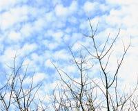 Zimy niebieskie niebo Zdjęcia Royalty Free