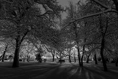 Zimy noc w parku Fotografia Stock