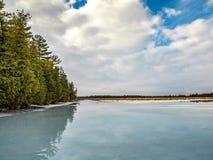 Zimy odwilży Cedrowy las Obok Zamarzniętego bagna Obraz Royalty Free