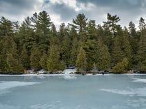 Zimy odwilży odbić 2 cedru las Obok Zamarzniętego bagna Fotografia Royalty Free