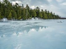 Zimy odwilży odbić 3 cedru las Obok Zamarzniętego bagna Fotografia Stock