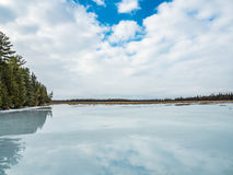 Zimy odwilży odbić 5 cedru las Obok Zamarzniętego bagna Obraz Stock