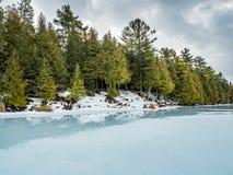 Zimy odwilży odbić 6 cedru las Obok Zamarzniętego bagna Obraz Stock