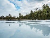 Zimy odwilży odbić 7 cedru las Obok Zamarzniętego bagna Zdjęcie Stock