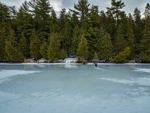 Zimy odwilży odbić 8 cedru las Obok Zamarzniętego bagna Fotografia Royalty Free