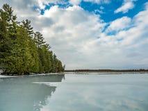 Zimy odwilży odbić 10 cedru las Obok Zamarzniętego bagna Obraz Royalty Free