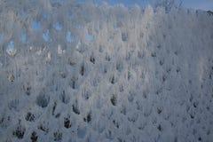 Zimy ogrodzenie Zdjęcie Royalty Free