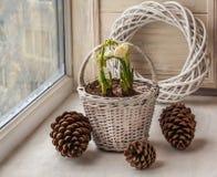 Zimy okno z daffodils Obrazy Stock