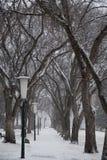 ZIMY opad śniegu NA drzewach obrazy royalty free