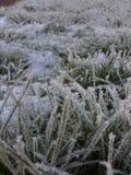 Zimy oszronieć zdjęcie royalty free