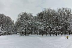 Zimy panorama z śniegiem zakrywał drzewa w South Park w mieście Sofia obraz royalty free