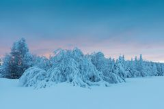 Zimy panoramy krajobraz z lasem, drzewa zakrywał śnieg i wschód słońca E Święta tła blisko czerwony czasu fotografia royalty free