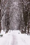 Zimy parkowa aleja Zdjęcia Royalty Free