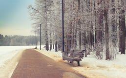 Zimy parkowy tło Fotografia Royalty Free