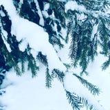 Zimy Peterhof natury śnieżny dzień fotografia royalty free