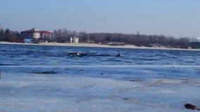 Zimy pikowanie Rzeczny nurek w akwalungu kostiumu pływaniu w wodzie Nurek w zimy rzece zdjęcie wideo