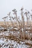 Zimy preria z suchą roślinnością zdjęcie stock