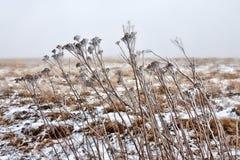 Zimy preria z suchą roślinnością zdjęcie royalty free