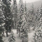Zimy przejażdżka zdjęcia stock