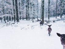 Zimy przyrody krajobraz z potomstwami zdjęcie royalty free