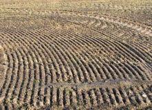 Zimy pszeniczny pole Obraz Royalty Free