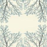 Zimy ramowy tło z śniegiem zakrywał gałąź, tekstura Zdjęcia Stock