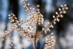 Zimy roślina Obraz Stock
