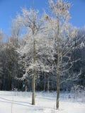 Zimy roślinność, krzaki i drzewa zakrywający z, hoarfrost i śniegiem, lodu piórko Zdjęcia Stock
