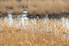 Zimy rzeka Obrazy Royalty Free