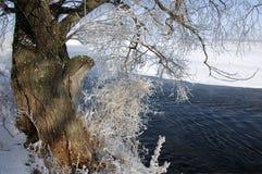 Zimy rzeka Lód i mgła Zimy rzeka Lód i mgła Zdjęcie Stock