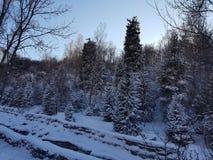 Zimy rzeka w parku fotografia royalty free