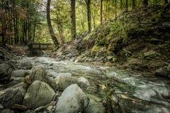 Zimy rzeki przepływ przez lasu Zdjęcia Stock