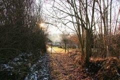 Zimy słońca bramy drzewa fotografia royalty free