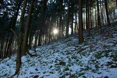 Zimy słońca Lasowi promienie Obrazy Stock